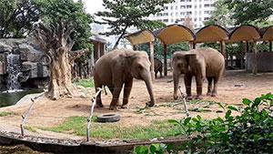 Saigon Zoo & Botanical Garden